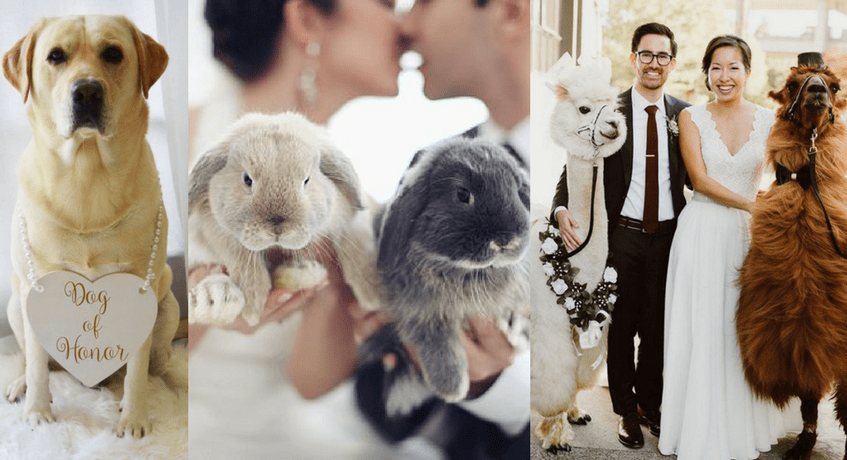 Ways to incorporate your pet into the wedding